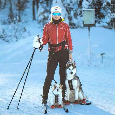 skiing with dog