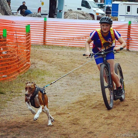 bike racing with dog